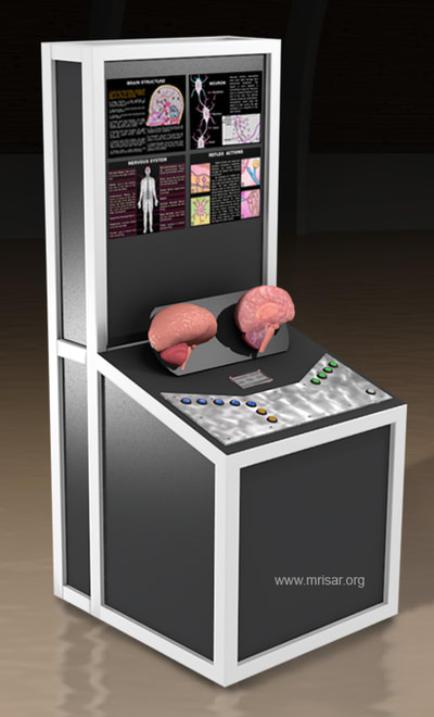 MRISAR's Interactive Brain Medical Exhibit