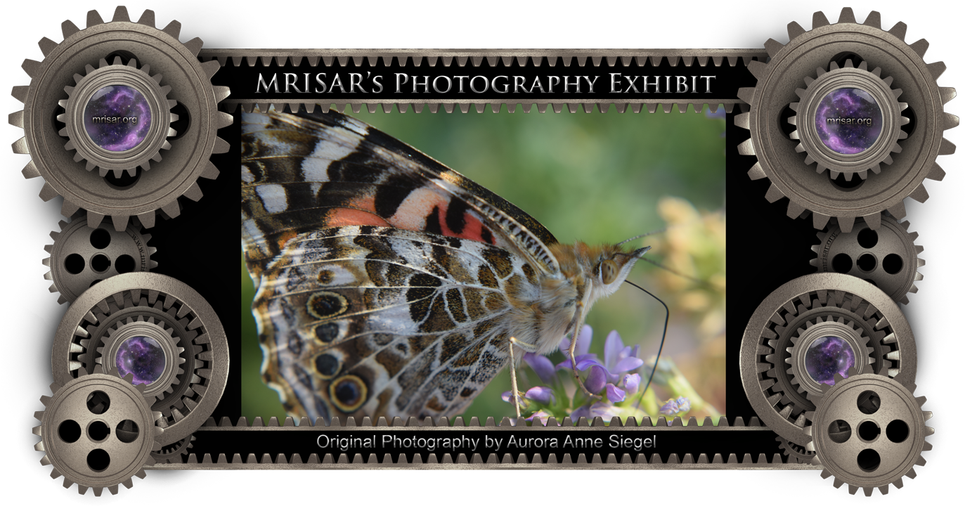 Poised Butterfly; Original Photography of Aurora Anne Siegel, an awarded, published and exhibited; multi-disciplined artist, photographer, writer and engineer.  She is also a member of MRISAR's R&D Team.  Prints of this piece can be any size, but are 24