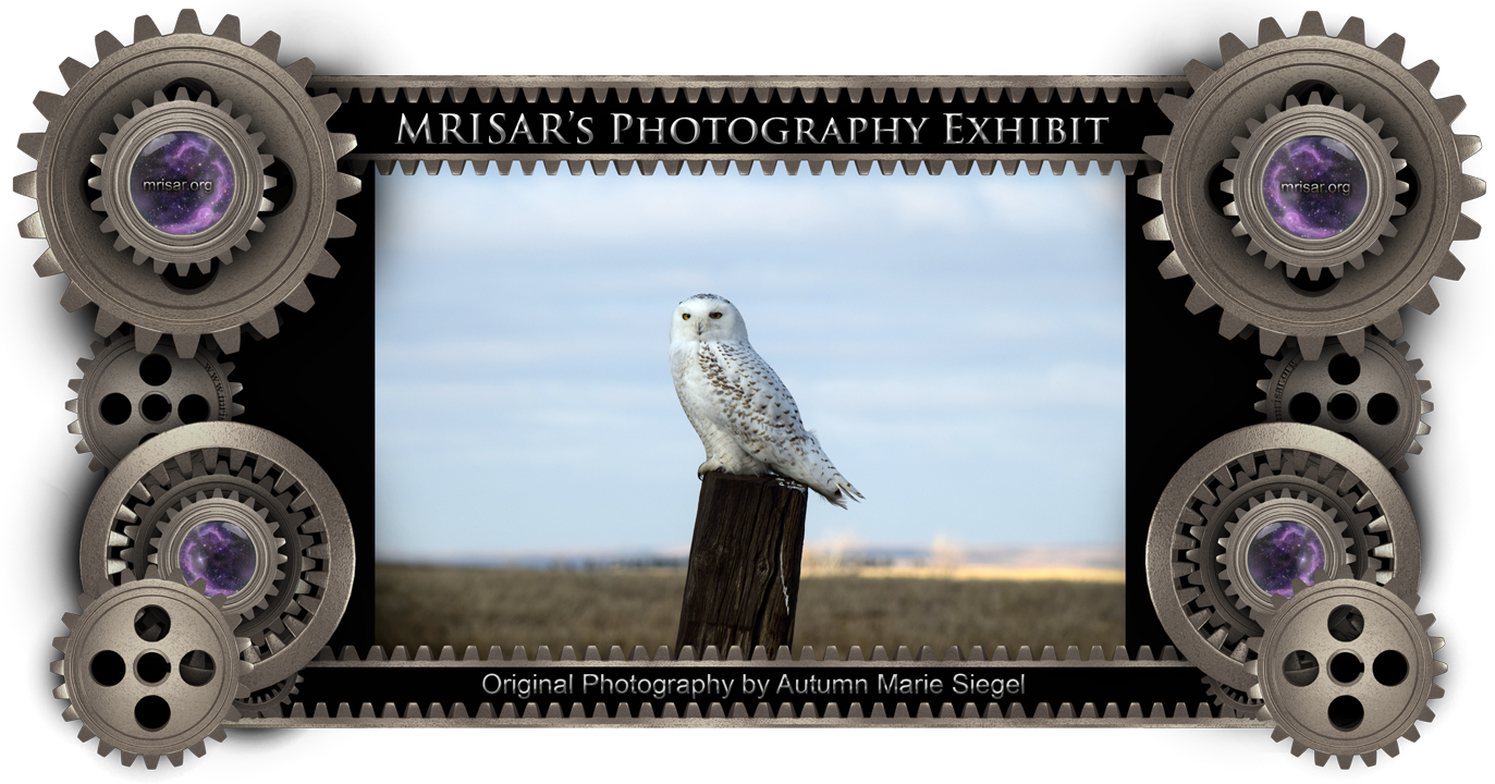 Curious Owl; Original Photography of Autumn Marie Siegel, an awarded, published and exhibited; multi-disciplined artist, photographer, writer and engineer.  She is also a member of MRISAR's R&D Team.  Prints of this piece can be any size, but are 24