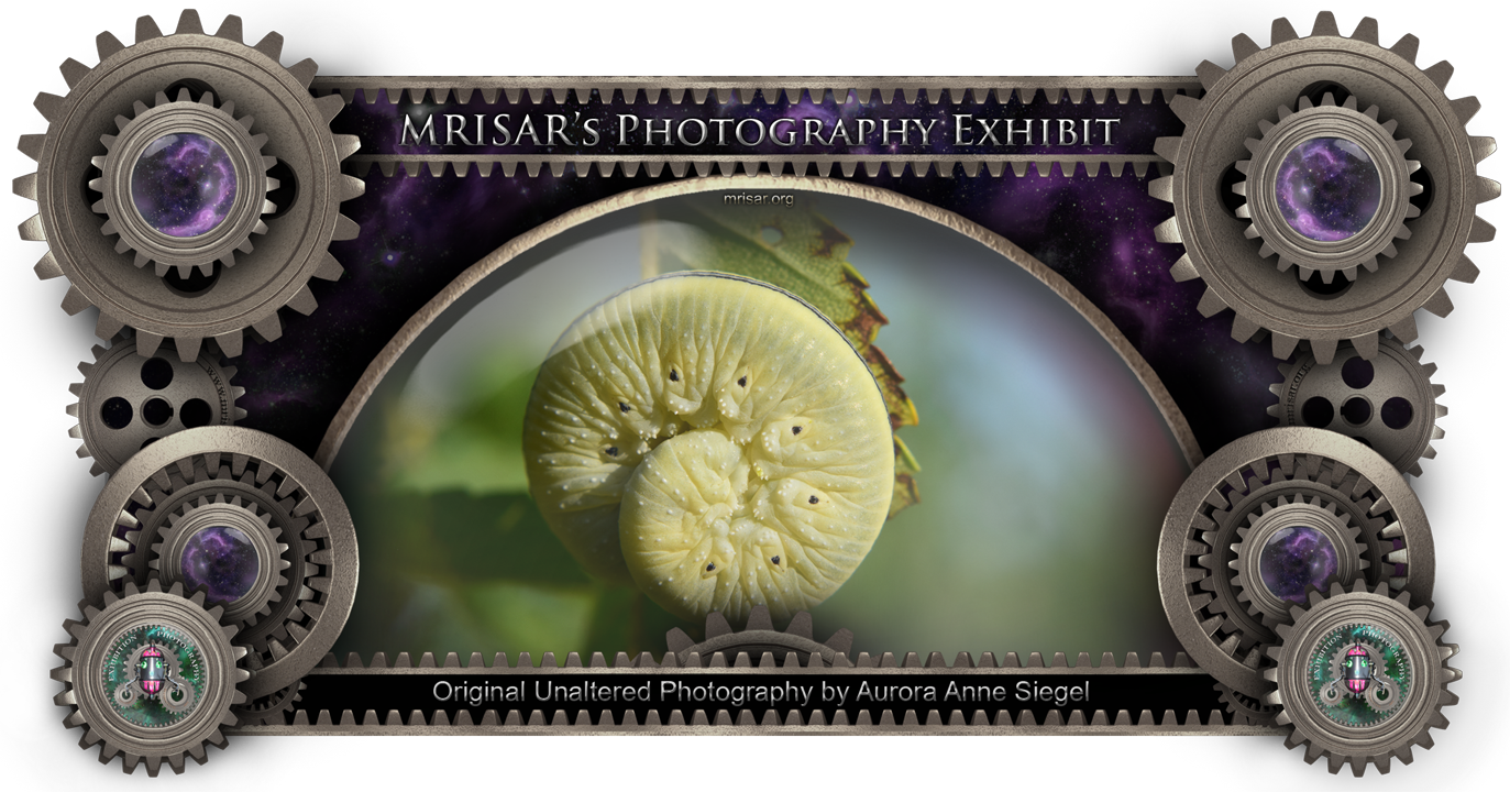 Furled Friend; Original Unaltered Photography of Aurora Anne Siegel, an awarded, published and exhibited; multi-disciplined artist, photographer, writer and engineer. She is also a member of MRISAR's R&D Team.  Prints of this piece can be any size, but are 24